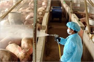 آنفولانزای خوکی یا نوع A
