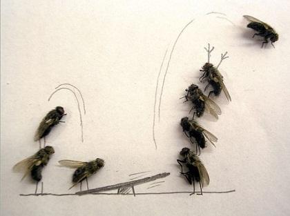 تصویر و نقاشی  جالب با لاشه مگس